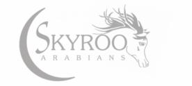 Skyroo Arabians